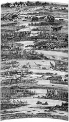 Progressive developments flora and fauna successive ages of the