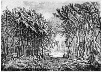 The first forests. Devonian period, vintage engraving.