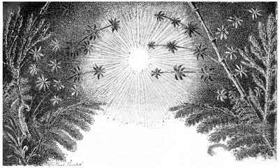 The Carboniferous period, vintage engraving.