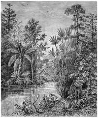 Roślinny krajobraz okresu kredowego, Bohemia, vintage engra - 92856095