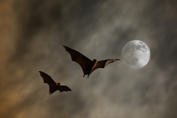 Bat silhouettes with super moon - Halloween festival