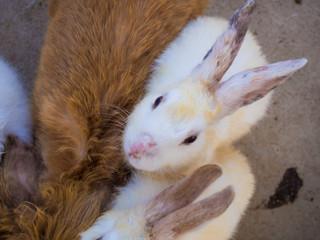 Group of sweet bunny rabbits family