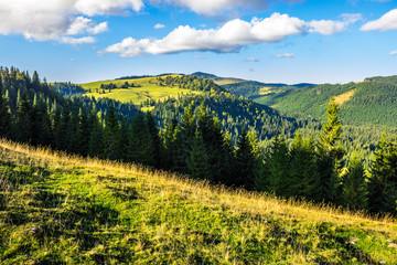 coniferous forest in romaninan mountain  at sunrise