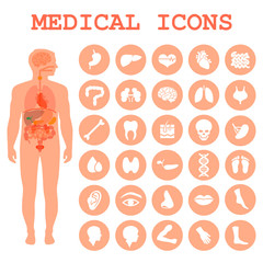 medical infographic icons, human organs, body anatomy