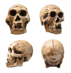 Collection of human skull isolated on white