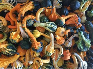 real pumpkins