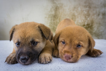 Close up of twin puppies funny