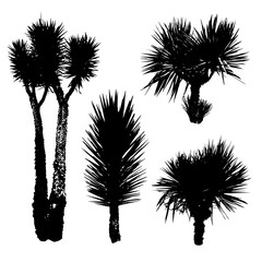 Black silhouettes of different Yucca