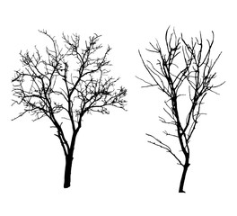 Two winter tree black silhouettes