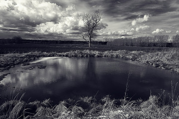 black and white photo autumn landscape
