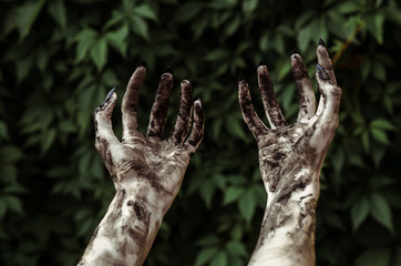 Horror and Halloween theme: Terrible zombie hands dirty with black nails reaches for green leaves, walking dead apocalypse, first-person view