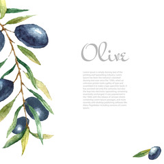 Watercolor olive branch background.