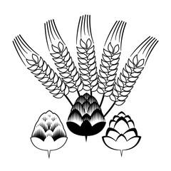 Hop flowers with spikes Beer ingredients