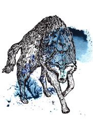 Wolf black and silver drawing on a blue green watercolor splash background.
