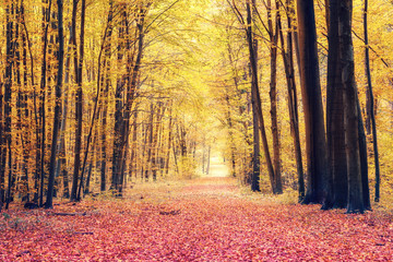 Wall Murals Road in forest Autumn park