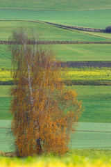 Wall Mural - Herbst