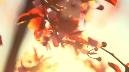 Klistermärke - Spring flowers. Beautiful orchard. Abstract blurred background