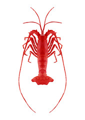 polygonal rock lobster, polygon sea life, isolated vector illust