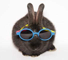 Animali pazzi: piccolo coniglio con gli occhiali da sole