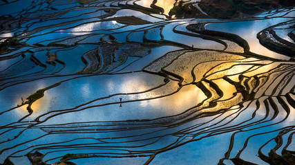 Aerial view of terraced rice fields, Yuannan, China
