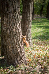 Picture of squirrel climbing the tree