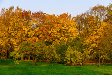 Autumn Scenery with Trees on Meadow