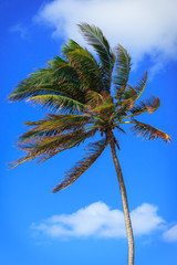 palm tree in strong wind