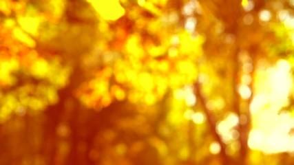 Fotoväggar - Falling autumn leaves over yellow autumnal background