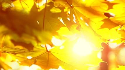 Fotoväggar - Autumn. Yellow blurred fall autumnal background