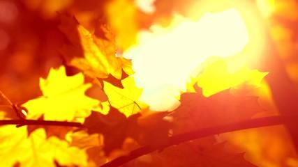 Fotoväggar - Autumn leaves border