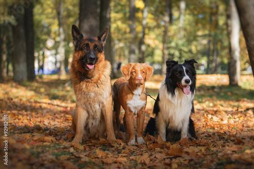 Allen Park Dog License