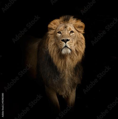 lion portrait on black photo libre de droits sur la banque d 39 images image 92983080. Black Bedroom Furniture Sets. Home Design Ideas