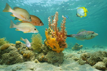 Tropical fish and colorful sea sponges