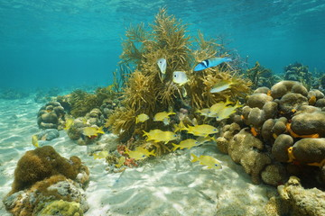 Tropical reef fish underwater swimming near corals