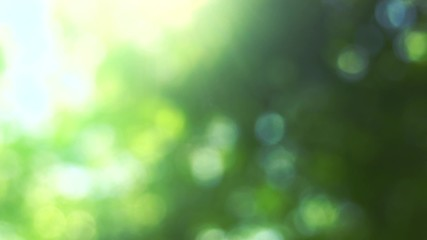 Fotoväggar - Blurred nature background with sun flare