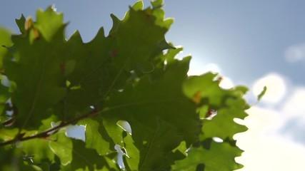 Fotoväggar - Sun shine through the blowing on wind green leaves