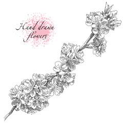 Beauty hand drawn flowers