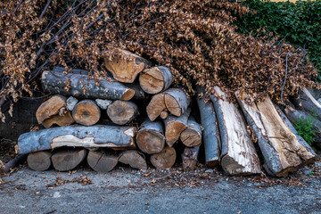 Big timber logs and dried leaves