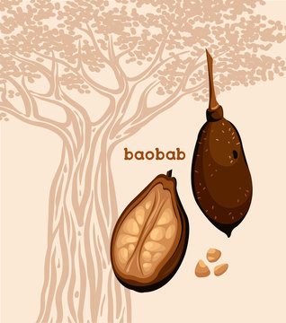 Fruit of baobab tree and seeds.