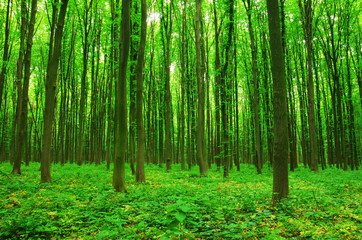Wall Murals forest green