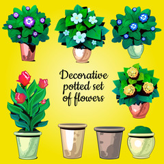 Set of decorative plants flowers and empty pots