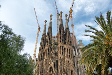 Sagrada Familia Church and Green Tree Tops