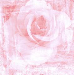 Flower beautiful rose, art paint illustration for background
