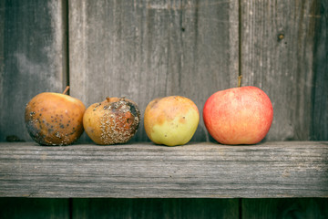 Rotten apples on wooden background