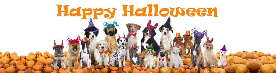 Happy halloween dogs