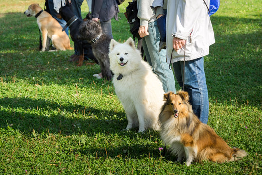 A group of dogs sitting near their trainers in a dog school