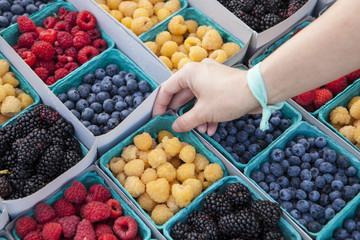 Organic red and gold raspberries, blueberries and blackberries, Farmers Market