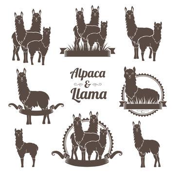 Alpaca and llamas emblems collection.