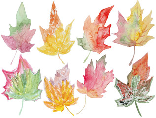 maple watercolor leaves