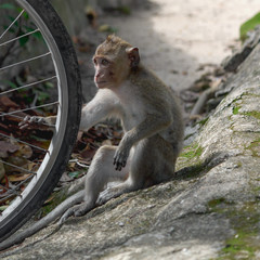 Portrait of cute baby monkey playing with bicycle wheel